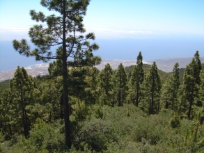 Teide Teneriffa Chimague