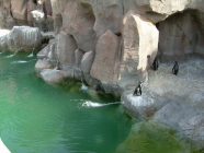 jungle park teneriffa pinguine