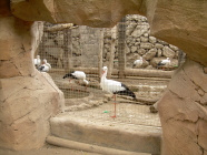 jungle park teneriffa storch