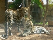 jungle park jaguare