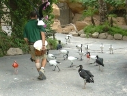Teneriffa jungle Park Vogel 66
